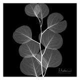 Eucalyptus on Black Posters af Albert Koetsier