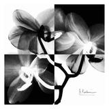 Orchid Black and White on Squares Prints by Albert Koetsier