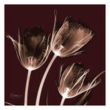 Tabitha Tulip Trio Prints by Albert Koetsier