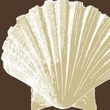 Natural Shell IV Plakater af N. Harbick