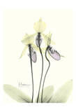 Lovely Orchids II Prints by Albert Koetsier