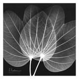 Orchid Tree Black and White Affiches par Albert Koetsier