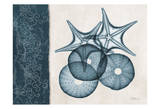 Sea Urchin Starfish Blue Prints by Albert Koetsier