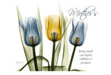 Trio Tulips Mother&#39;s Touch Print by Albert Koetsier