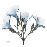 May Flowers Poster van Albert Koetsier