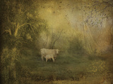Tendre Charolais Prints by Dawne Polis