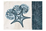 Starfish Sand Dollar Blue Posters by Albert Koetsier