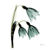 Three Tulips in Green Prints by Albert Koetsier