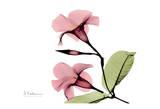 Pink Mandelila Bunch Prints by Albert Koetsier