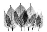 Leaf Explosion in Black and White Art by Albert Koetsier