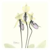 Orchid Yellow Trio Prints by Albert Koetsier
