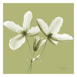 Twin Buds on Pale Green Print by Albert Koetsier