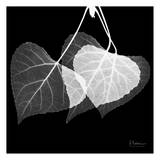 Three Leaves Three on Black Print by Albert Koetsier
