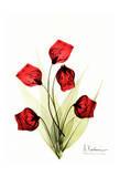 Sandersonia in Red II Print by Albert Koetsier