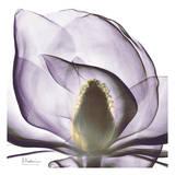 Precious Orchid in Purple Close Posters af Albert Koetsier