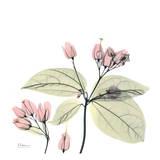 Pretty Pink Blooms II Posters by Albert Koetsier