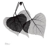 Three Leaves Three Prints by Albert Koetsier