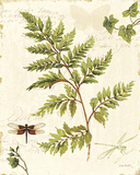 Ivies and Ferns I Poster par Lisa Audit