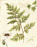 Ivies and Ferns I Poster par Lisa Audit
