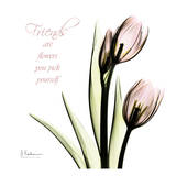 Tulip Friends Print by Albert Koetsier