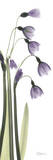Snow Drop in Lavender Prints by Albert Koetsier