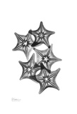 Star Fish Group in Black and White Prints by Albert Koetsier