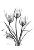 Tulips Bunch in Black and White Affiches par Albert Koetsier