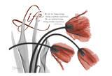 Life Tulips in Red Art by Albert Koetsier