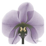 Precious Orchid in Purple Prints by Albert Koetsier