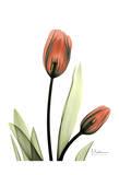 Albert Koetsier - Red Tulips - Poster