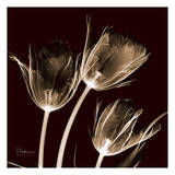 Tulips Trio on Brick Posters by Albert Koetsier