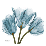 Tulips in Blue Prints by Albert Koetsier
