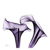 Violet Calla Twins Poster von Albert Koetsier