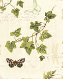 Ivies and Ferns II Print by Lisa Audit