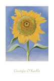Sunflower, New Mexico, c.1935 Prints by Georgia O&#39;Keeffe