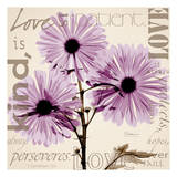 Love, Violet Chrysanthemum Prints by Albert Koetsier