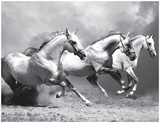 White Stallions II Prints