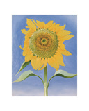 Sunflower, New Mexico, c.1935 Affiches par Georgia O'Keeffe