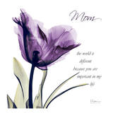 Mom, Purple Tulip Print by Albert Koetsier