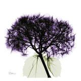Albert Koetsier - Purple Hydrangea Close Up - Poster