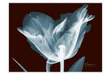 Single Tulip Blue on Red Posters by Albert Koetsier