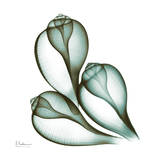 Sea Shells in Green II Print by Albert Koetsier