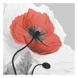 Poppy Prince Prints by Albert Koetsier