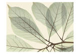 Magnolia Leaf Close Print by Albert Koetsier