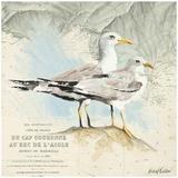Mouettes Cap Couronne Prints by Pascal Cessou