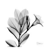 Madelia in Black and White Kunst af Albert Koetsier