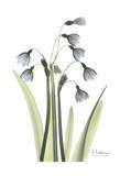 Snow Drop in Color Prints by Albert Koetsier