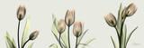 Spring Tulip Triple Posters by Albert Koetsier