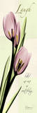 Laugh, Pink Tulips Poster von Albert Koetsier