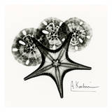 Starfish in Black and White Print by Albert Koetsier